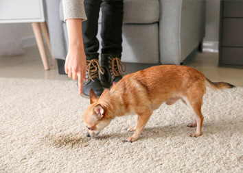 Чем вывести запах собачьей мочи с ковра